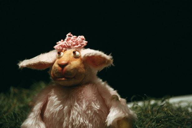 Schaf fürs Leben Tröbinger 2